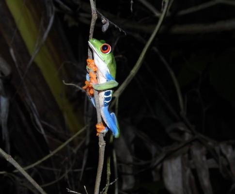 Living abroad : Costa Rica