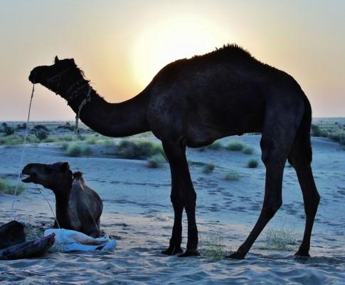 Rajasthan : a postcard